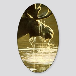 Moose Dipping His Head Into Water Sticker (Oval)