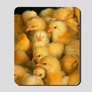 Little Yellow Chicks  Mousepad