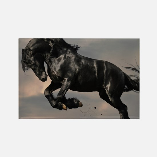 Beautiful Black Horse Magnets