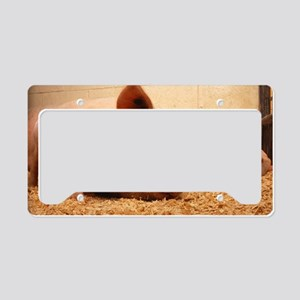 Sow and Piglets License Plate Holder
