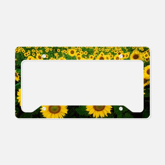 Field of Sunflowers License Plate Holder