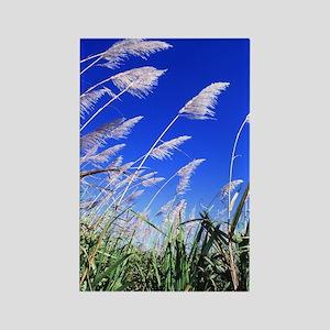 Sugarcane Field Rectangle Magnet