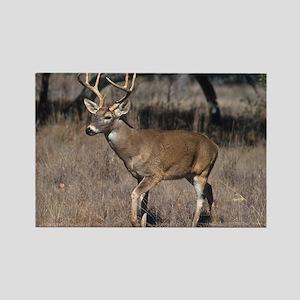 White Tail Deer Rectangle Magnet