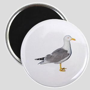 Yellow Legged Gull Magnet