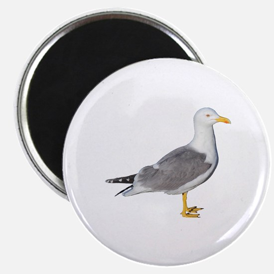 Yellow Legged Gull Magnet