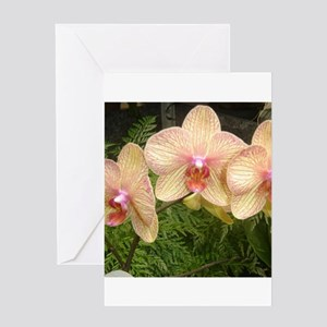 DSC02000 Greeting Cards