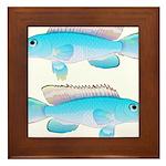 Blue Congo Cichlid Framed Tile