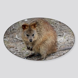 Cute Quokka Sticker (Oval)