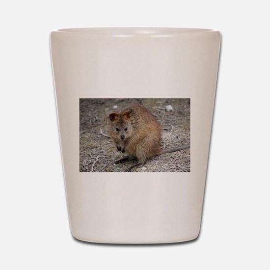 Cute Quokka Shot Glass
