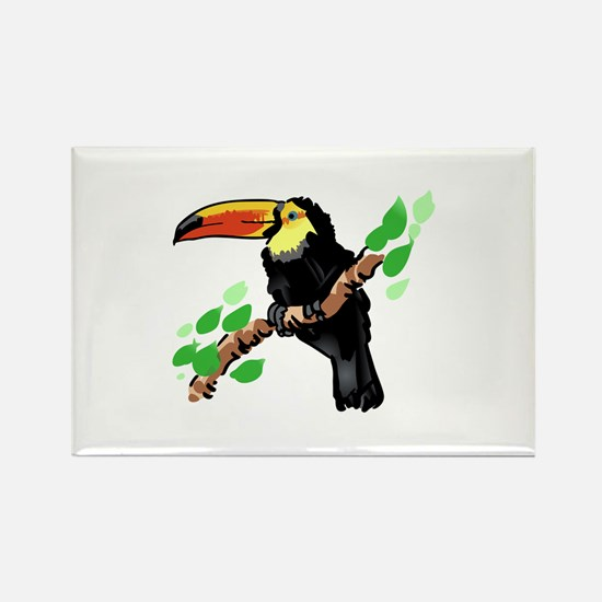 Toucan Magnets