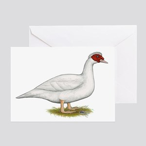 Duck White Muscovy Greeting Cards