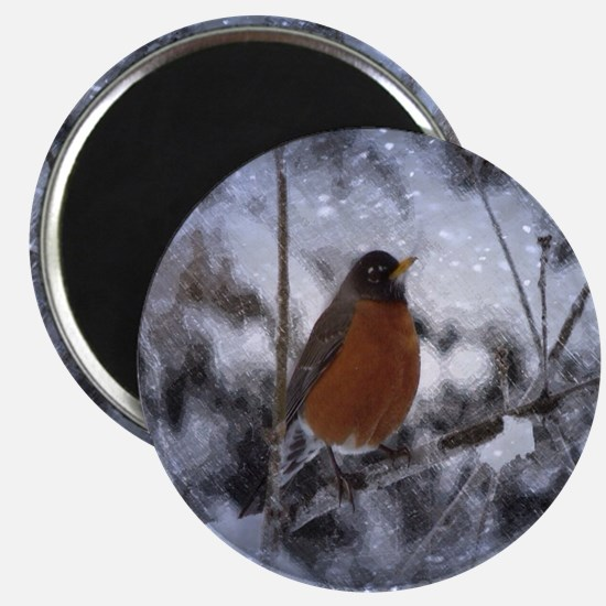 nature winter robin bird Magnet