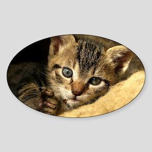 Soft Life Kitten Sticker (Oval)