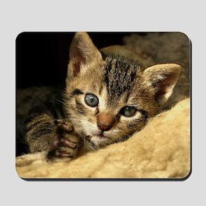 Soft Life Kitten Mousepad