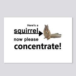 Concentrate on the squirr Postcards (Package of 8)