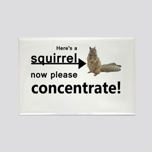 Concentrate on the squirrel Magnets