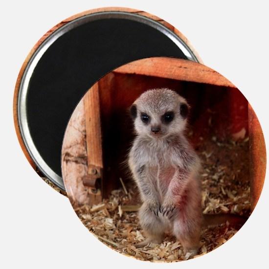 Baby Meerkat Magnet