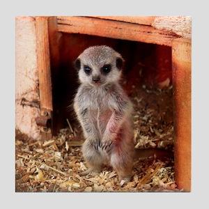 Baby Meerkat Tile Coaster