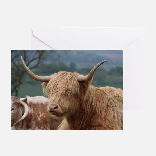 Unique Cattle Greeting Card