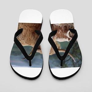 Highland cattle Flip Flops