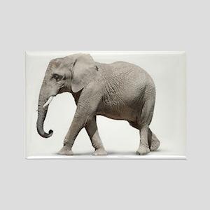 Elephant Photo Magnets