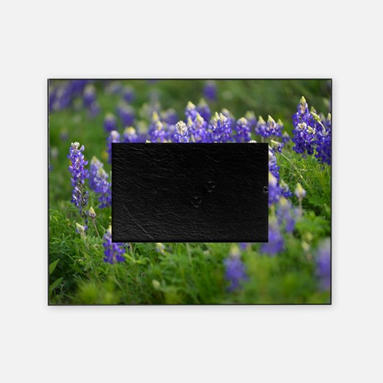 Bluebonnets Everywhere Picture Frame