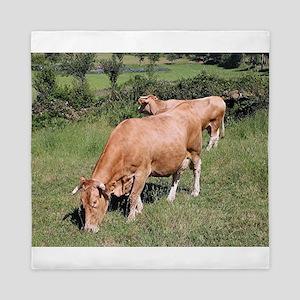 Cows in field on El Camino, Spain Queen Duvet