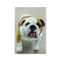 Bulldog Rectangle Magnet