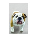 Bulldog Sticker (Rectangle 10 pk)
