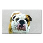 Bulldog Sticker (Rectangle 50 pk)