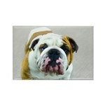 Bulldog Rectangle Magnet (100 pack)