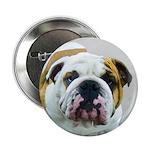Bulldog 2.25