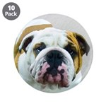 Bulldog 3.5