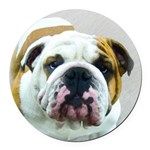 Bulldog Round Car Magnet