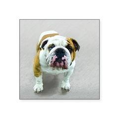 Bulldog Square Sticker 3