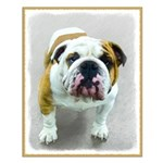 Bulldog Small Poster