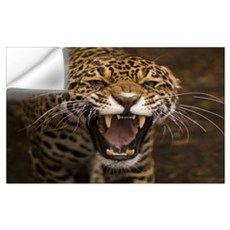 Growling Jaguar Wall Decal