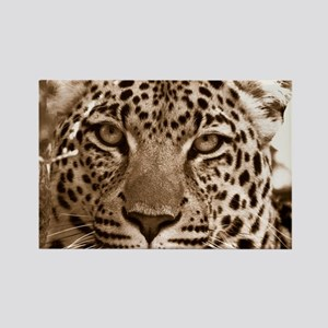 Leopard Magnets