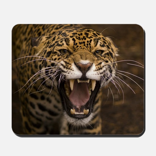Growling Jaguar Mousepad