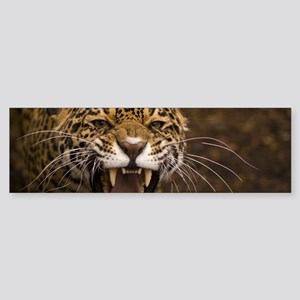 Growling Jaguar Bumper Sticker