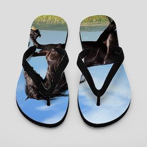 Black Horse Running Flip Flops