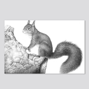Red Squirrel Postcards (package Of 8)