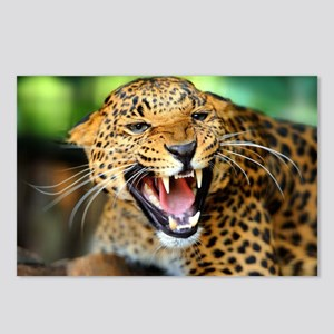 Growling Leopard Postcards (Package of 8)