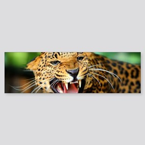 Growling Leopard Bumper Sticker