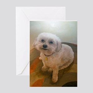 Miniature Poodle Angus Greeting Cards