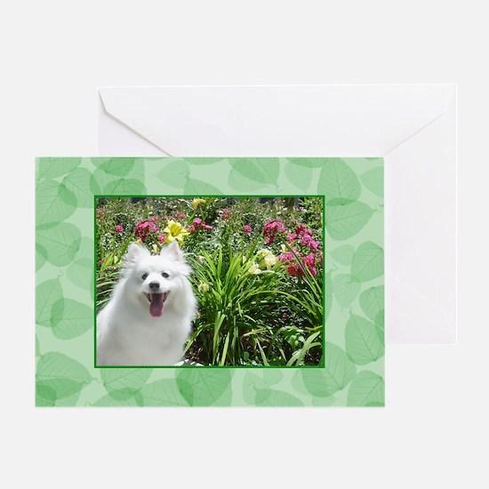 American Eskimo Dog Greeting Card