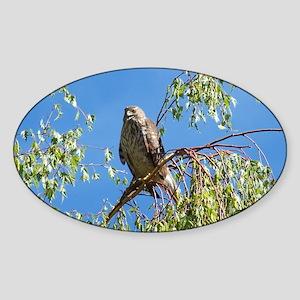 Hawk Sticker (Oval)