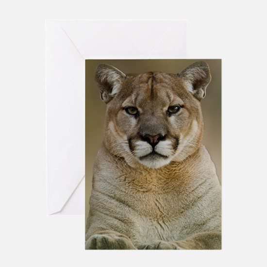 Puma Greeting Cards