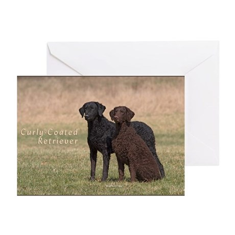 Curly Coated Retriever-5 Greeting Cards (Pk of 10)