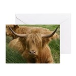 Highland Cow Greeting Cards (Pk of 10)